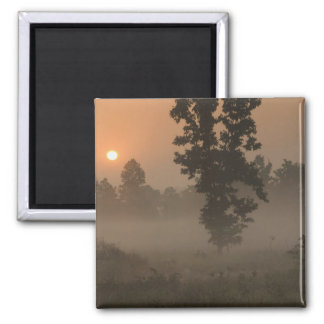 Early morning, rising sun and ground fog magnet