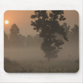 Early morning, rising sun and ground fog mouse pad