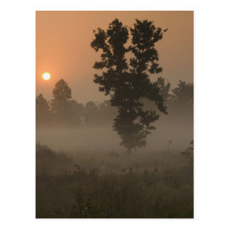 Early morning, rising sun and ground fog postcard