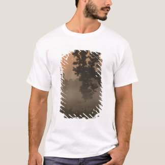 Early morning, rising sun and ground fog T-Shirt