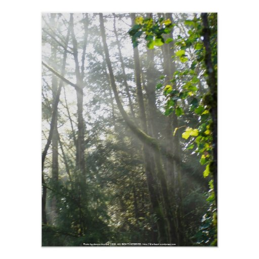 Early Morning Sun Rays #16 Poster