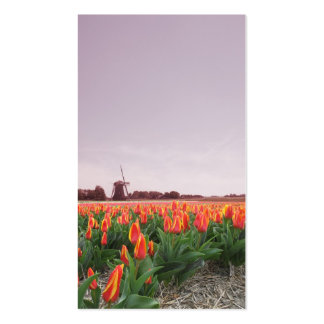 Early Morning Tulip Field Landscape with Windmil Business Card