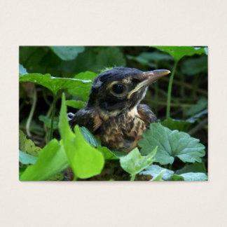 Early Robin-hood (Baby Bird) ACEO Art Cards