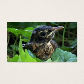 Early Robin-hood (Baby Bird) Business Cards