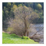 """Early Spring 5.25"""" Square Invitation Card"""