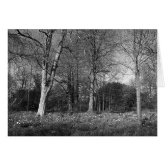Early Spring at, Bute Park, Cardiff Greeting Card