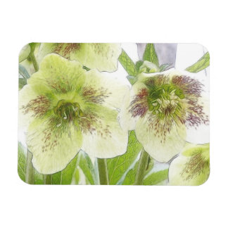 Early Spring Blooms - Hellebores! Magnet