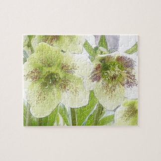 Early Spring Blooms - Hellebores! Jigsaw Puzzles