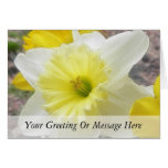 Early Spring Daffodil Greeting Card