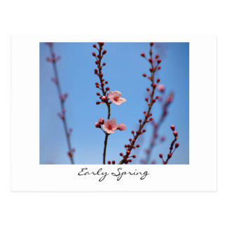 Early Spring Flowers Postcard