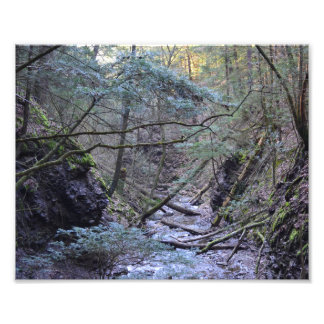 Early Spring In The Forest. Photo Print