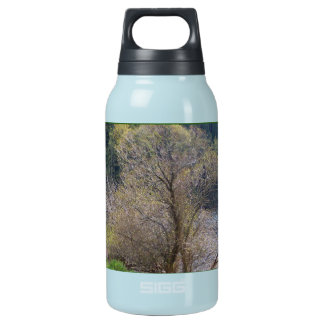 Early Spring Insulated Water Bottle