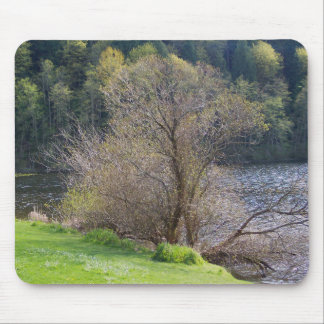 Early Spring Mouse Pads