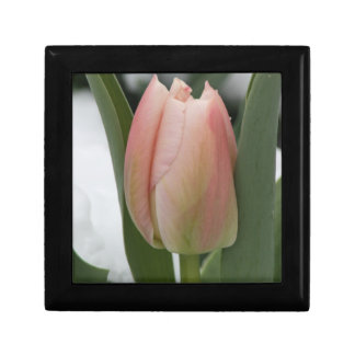 Early Spring Pink Tulip in Snow Gift Box