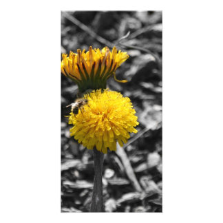 Early Spring Pollination Customized Photo Card