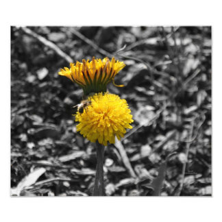 Early Spring Pollination Photo Print