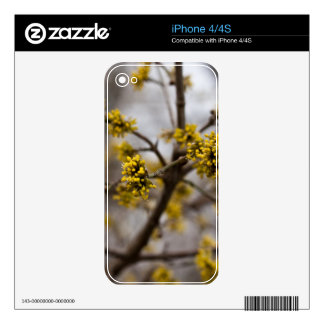 Early spring skin for the iPhone 4S