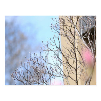 Early Spring Tree Postcard