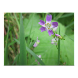 Early Spring Wildflower Poster