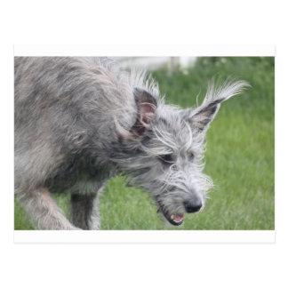 ears in motion postcards