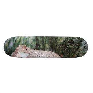 Earth Creature Skateboard Deck
