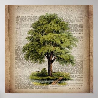 earth day botanical art vintage oak tree posters