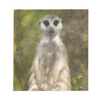 Earth male, Meerkat