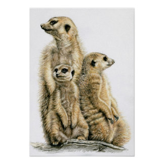 Earth male - Meerkats Poster