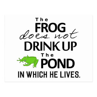 Earth Wisdom - The Frog Does Not Drink Up... Postcard