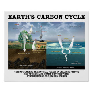 Earth's Carbon Cycle (Earth Science) Poster