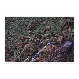 EarthTone Photo Print