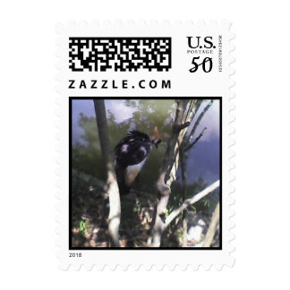 East African Crowned Crane Postage