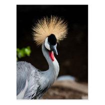 East African Crowned Crane Postcard
