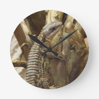 East African Spiny-Tailed Tropical Girdled Lizard Round Wallclock