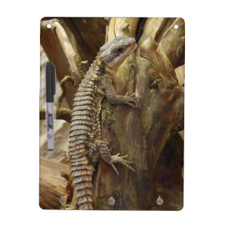 East African Spiny-Tailed Tropical Girdled Lizard Dry Erase Board
