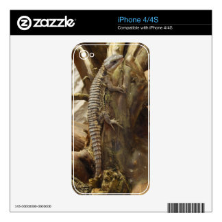 East African Spiny-Tailed Tropical Girdled Lizard Decals For The iPhone 4S