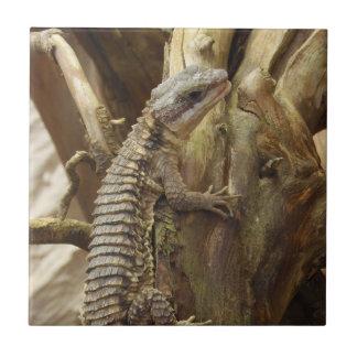 East African Spiny-Tailed Tropical Girdled Lizard Ceramic Tiles
