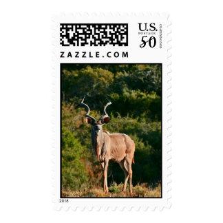 East Cape Kudu postage stamp