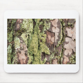 East Coast Pine Tree Bark Wet From Rain with Moss Mouse Pad