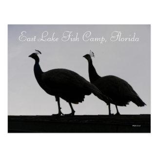 East Lake Fish Camp, Florida Postcard