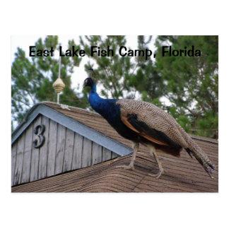 East Lake Fish Camp Florida Postcard