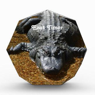 East Timor Crocodile Awards