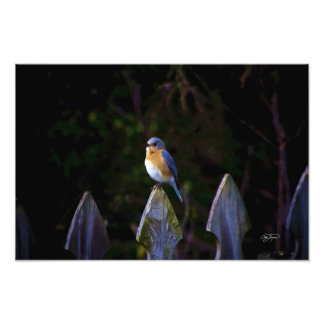 Eastenr Bluebird Art Picture Photo