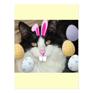 Easter Black and White Kitty Cat Postcard