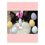 Easter Black & White Cat Post Card