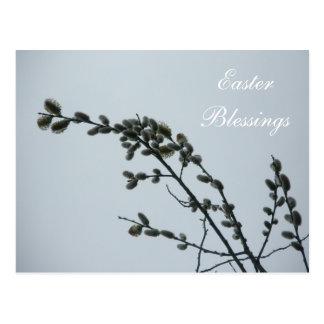 Easter Blessings Pussy Willow Catkins Postcard