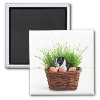 Easter Boston Terrier  dog 2 Inch Square Magnet