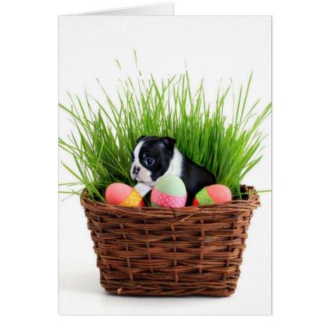 Easter Boston Terrier  dog Card