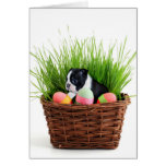 Easter Boston Terrier  dog Greeting Card