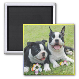 Easter boston terriers 2 inch square magnet